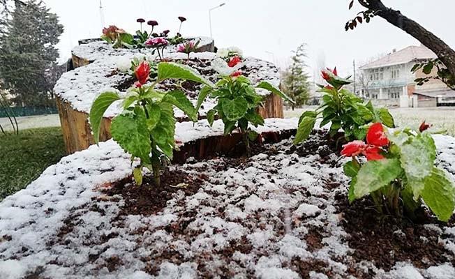 Denizli'de kar ve bahar bir arada