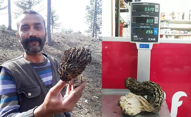 320 gramlık kuzugöbeği buldu