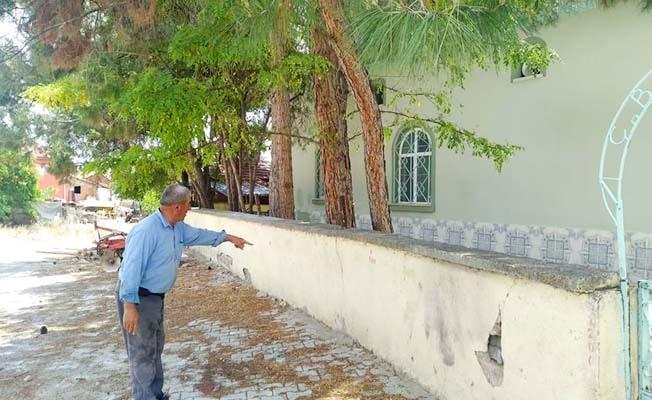 Cami bahçesindeki ağaçlar cemaati böldü: Faydalı mı, zararlı mı?