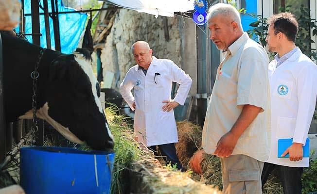Pamukkale Belediyesi'nden Veteriner Danışmanlık Hizmeti