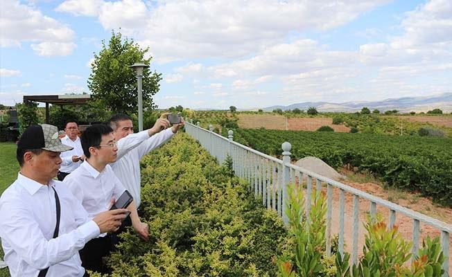 Çinli yatırımcılar Çal'a geldi: Hedef Çal üzümü ve Çal şarabı