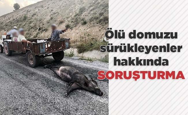 Ölü domuzu sürükleyenler hakkında soruşturma