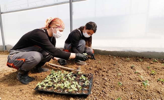 Honaz'da tohumlar toprakla buluştu