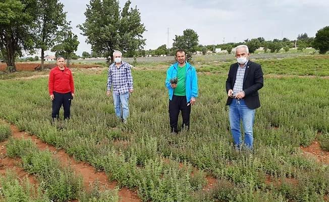Denizli'de tarım arazilerini don vurdu