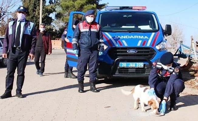 4 günlük kısıtlamada Jandarmadan sokak hayvanlarına şefkat eli