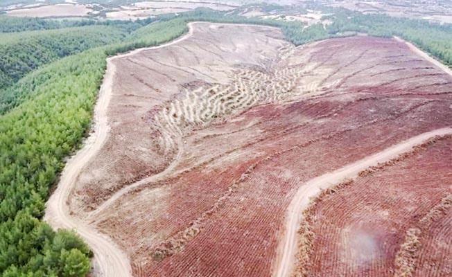 Çal'da endüstriyel plantasyon sahası hazırlığı başladı
