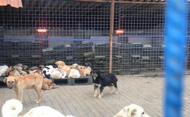 Aydın Büyükşehir'den sokak hayvanları için anlamlı uygulama