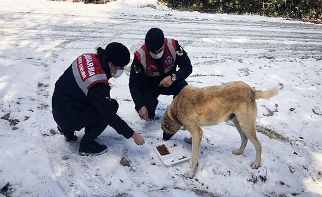 Jandarma sokak hayvanlarını zorlu iklim koşularında yalnız bırakmıyor