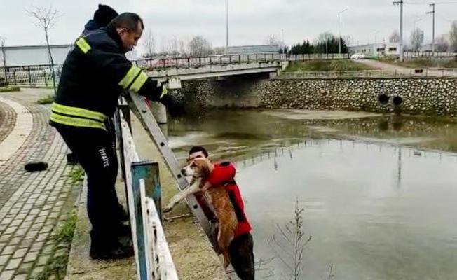 Kocaeli İtfaiyesi, köpekleri dereden kurtardı