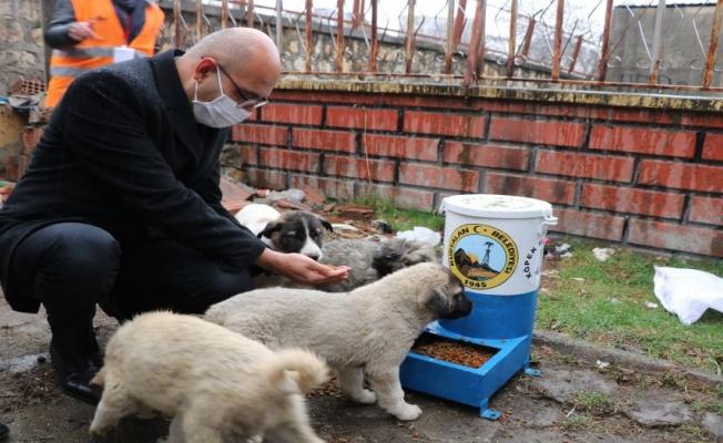Siirt Kurtalan'da sokak hayvanlarını unutulmadı