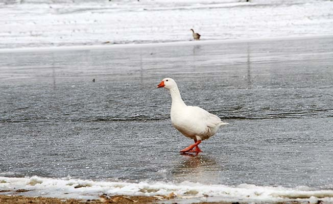 Kuş cenneti Yayla Gölü dondu