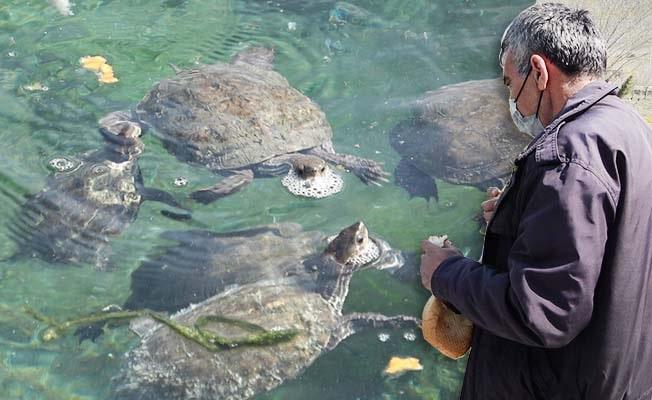 Denizli'nin 'Kaplumbağa terbiyecisi' su kaplumbağalarını yalnız bırakmıyor