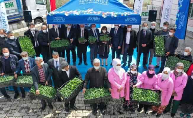 Gaziantep çiftçisine dev fide desteği