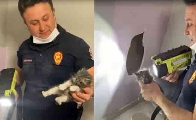 Mahsur kalan kediyi itfaiye ekipleri kurtardı