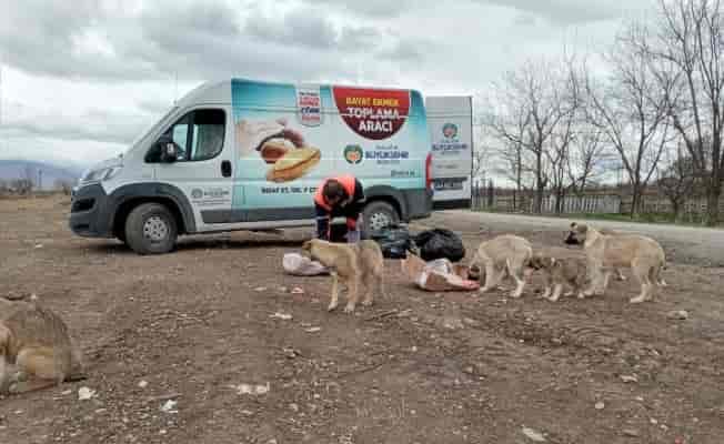 Malatya'da bayat ekmekler sokak hayvanlarına mama oldu