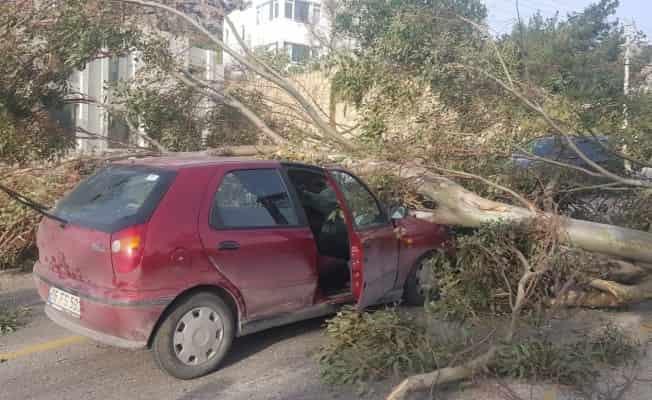 Otomobilin üzerine ağaç devrildi: 3 yaralı