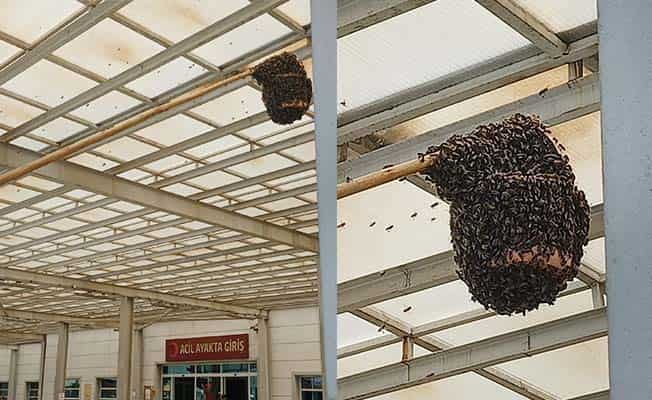 Acil servisi arılar bastı