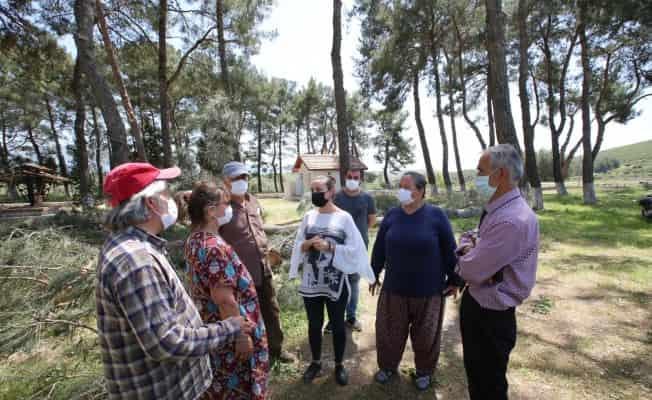 Asırlık ağaçların kesilmesini belediye başkanı durdurdu