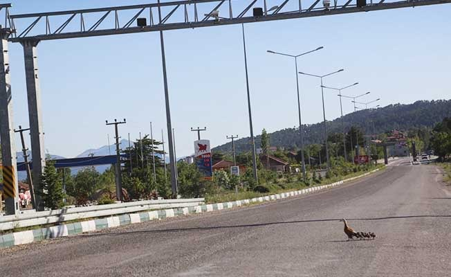 Yolunu kaybeden angut ailesi sokaklarda yürüyüşe çıktı