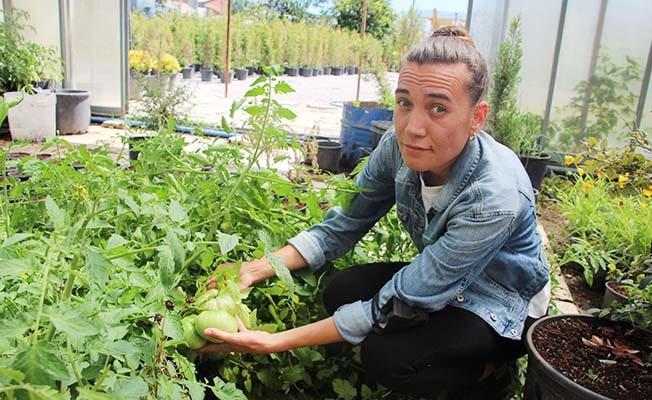 Baba kız, ata tohumunu korumak için 5 yıldır domates üretiyor