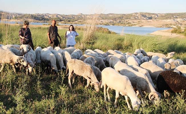 Bu çoban ailede baba iki, kızları üç dil biliyor