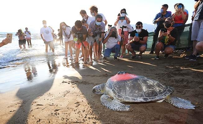 'Dünya Deniz Kaplumbağaları Günü'nde denize bırakıldılar