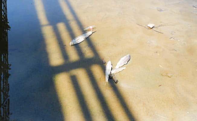 Menderes'teki balık ölümleri endişelendirdi