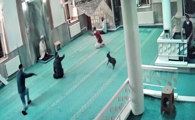 Sahibinin elinden kurtulup camiye dalan köpek korkuttu