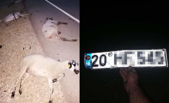 Sürüye çarpıp 9 koyunu telef etti, kaçarken plakayı bıraktı