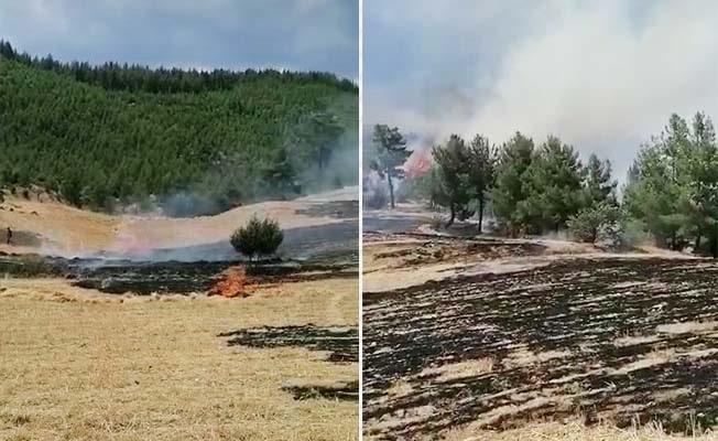 Acıpayam'da anız yangını ormanlık alana sıçradı