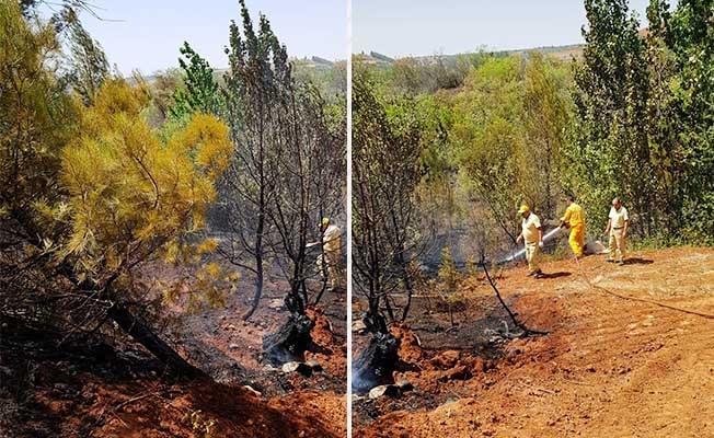 Çal'daki orman yangınında kundaklama iddiası