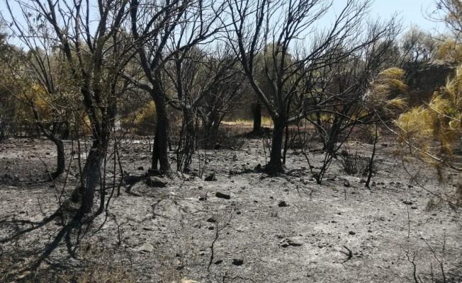 Datça'da çıkan yangında 10 dönüm zirai alan zarar gördü