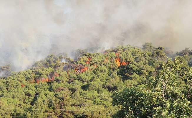 Foça'da yangını kontrol altına alma çalışmaları sürüyor