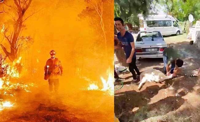 Antalya'dan dönen orman ekibini kurban keserek karşıladılar