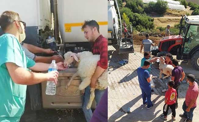 Köylüler hayvanlarını alevlerden kaçırıyor