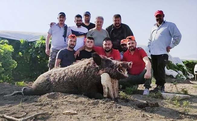 Mısır üreticisi Kocabaş canavarından kurtuldu