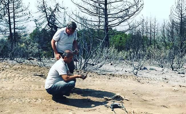 Yanan ormanlar için ağaçlandırma projesi başladı