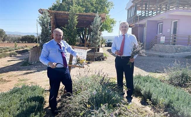 Büyükelçilerden lavanta hasadı