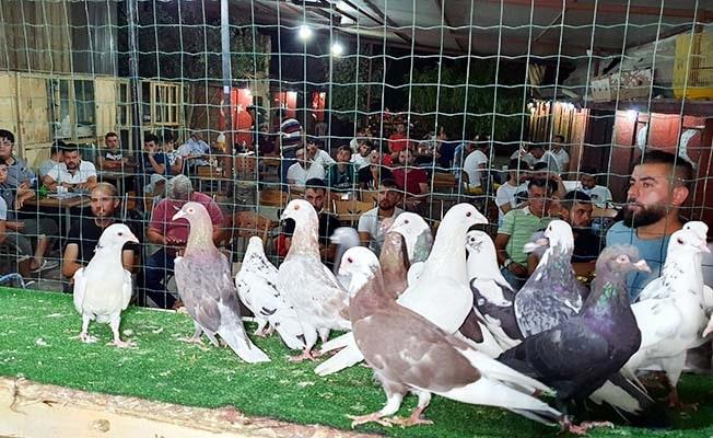 Patentli güvercinler Aydın'dan Denizli'ye uçtu