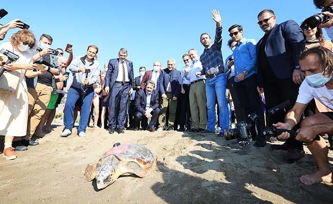 Tedavileri tamamlanan deniz kaplumbağaları deniz ile buluşturuldu