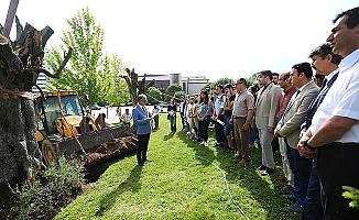 'Bilge Ağaçlar' PAÜ'de hayat bulacak