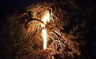 Ağaca düşen yıldırım geceyi aydınlattı