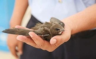 Merkezefendi'de Ebabil kuşu bulundu