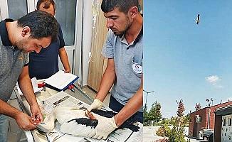 Yaralı leylek tedavisinin ardından özgürlüğüne bırakıldı