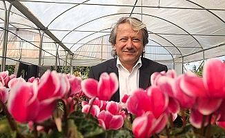 Türkiye'nin çiçekleri, Denizli firması ile daha kaliteli yetişiyor