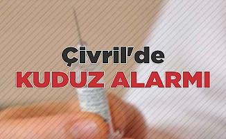 Çivril'de kuduz alarmı