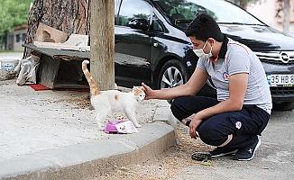 Bayramda sokak hayvanları da unutulmadı