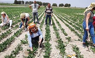 CHP'den çağrı; Çiftçilerin tüm borçları silinsin!