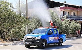 Pamukkale'de sinekle mücadele sürüyor