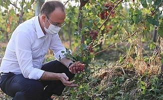 """Başkan Örki: """"Çiftçilerimizin zararlarını biran önce karşılayacağız"""""""